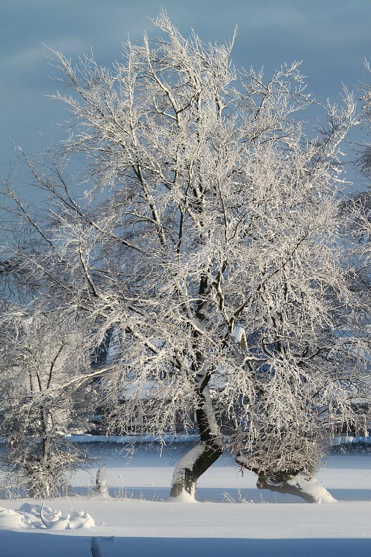 winter, snow, wintry, snowy, tree, winter dream, snow magic