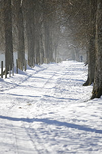 winter, away, cold, white, snow, trees, winter mood