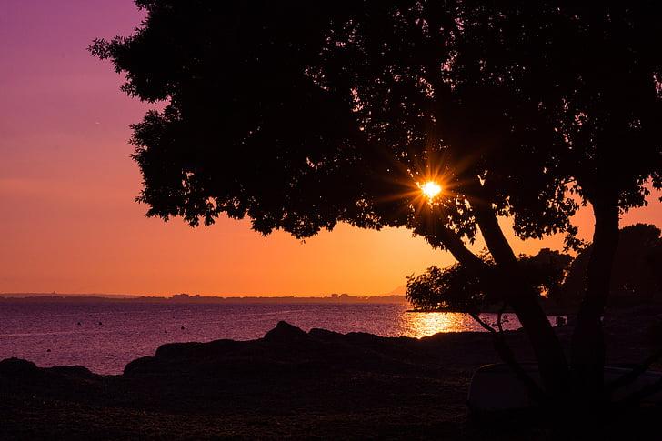 실루엣, 일몰, 태양 열, 나무, abendstimmung, 바다, 다시 빛