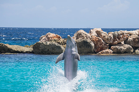 Yunus, akvaryum, atlama, Balık, hayvan, okyanus, su