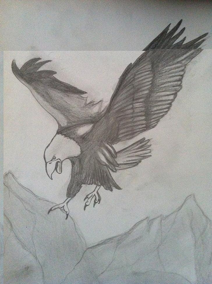 eagle, charcoal drawing, pencil drawing, drawing, bird of prey, animal, artwork