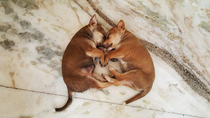 cute puppies, dog, puppy, cute puppy, animal, pet, adorable