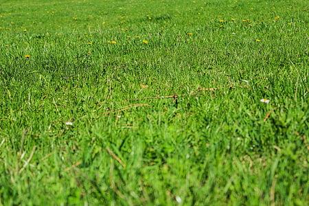Zelená, tráva, Príroda, trávnaté, trávnik, obyčajný, jar