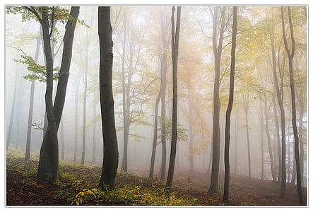 fog, forest, landmark, mist, nature, trees, tree