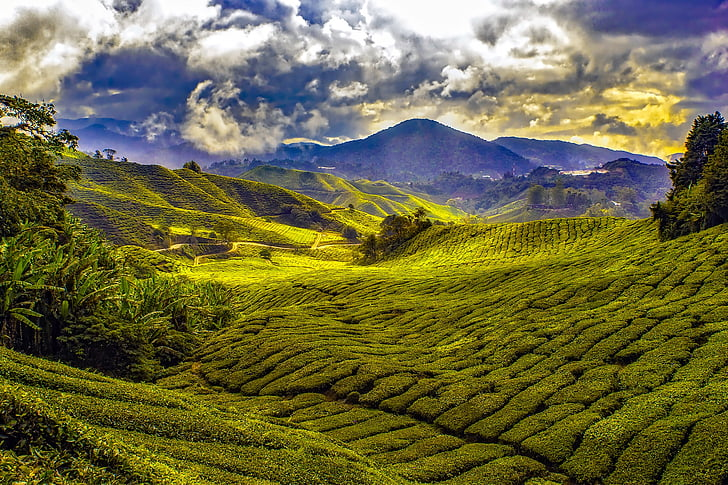 Малайзия, тропики, горы, небо, облака, поля, Луга