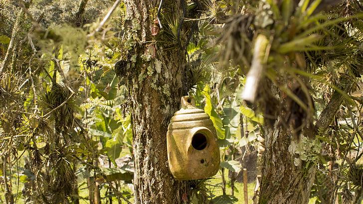 Bird house, puu, lehdet