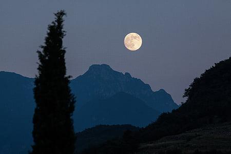 månen, Cypress, fjell, måne opp, fullmåne, romantisk, natt