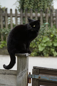 cat, black, black cat, guard, thrones, post, fence