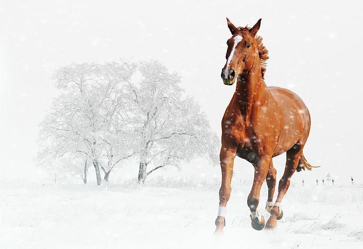 winter, horse, play, snow, animal, nature, snow landscape