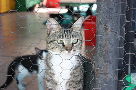 cat, kennel, cute cat, cat's eyes, animals, cat face