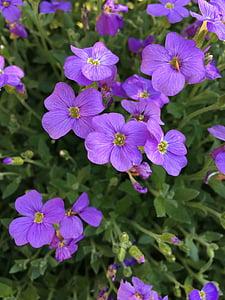 lill, lilled, õitsemine, Bloom, Aed, väike lilled, Daisy