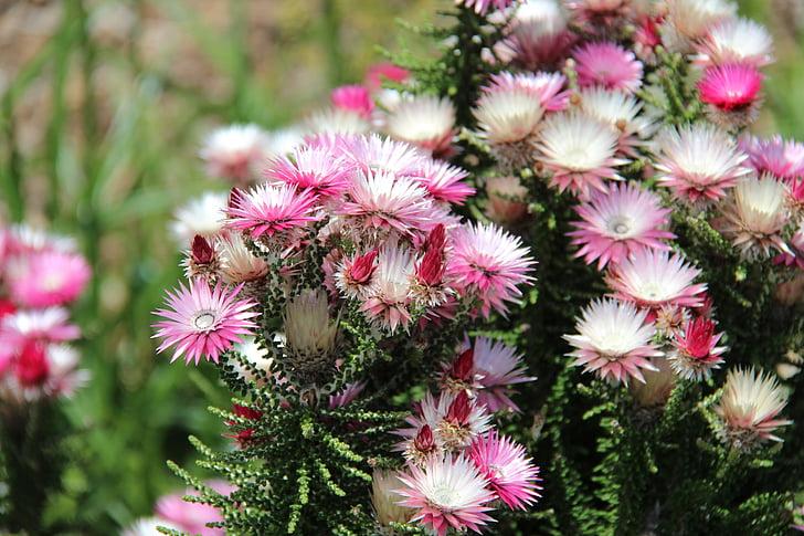Botanische, Tuin, botanische tuin, bloem, plant, natuur, groei