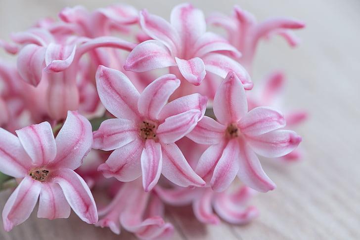 eceng gondok, bunga, merah muda, bunga, bunga, bunga merah muda, bunga musim semi