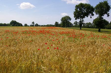 jačmeň, polia, Príroda, pole, Príroda, Prairie, tráva