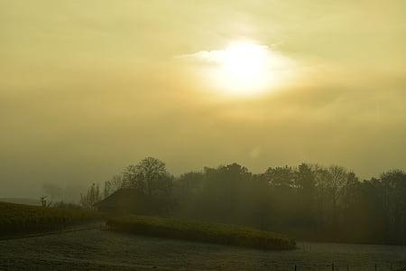 paisatge, morgenstimmung, Alba, boira, torna la llum, arbres, turó