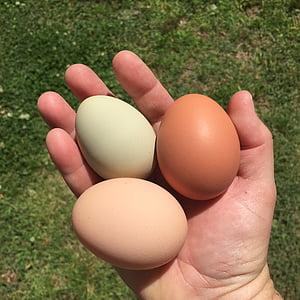 ous, pollastres, pollastres de pati del darrere, aliments, Setmana Santa, ou animal, natura