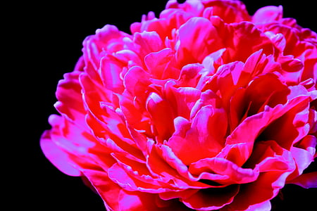 flower, buds, nature, plant, floral, blossom, spring