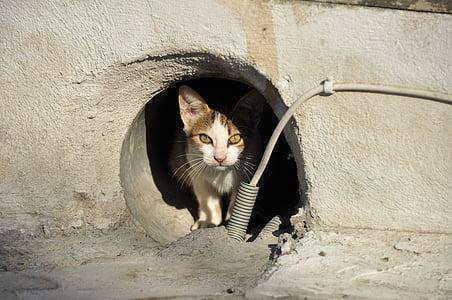 stray cat, cat greece, animal, cat's eyes, animals, pet