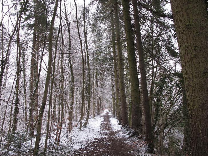 겨울 숲, 숲, 눈, 겨울, 겨울, 감기, 자연