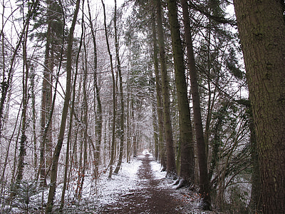 winter forest, forest, snow, winter, wintry, cold, nature