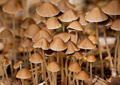 грибы, лес, Осень, Природа, Влажные, morsch, Вуд