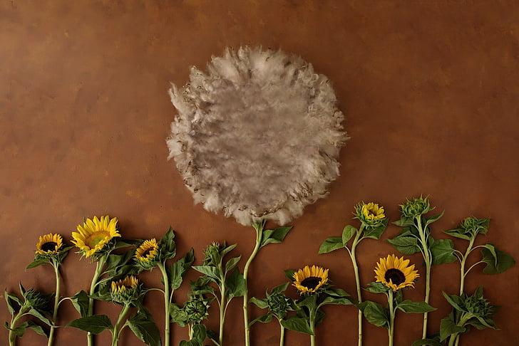 flor, teló de fons, nadó, puntal, teló de fons per a nadó, fotografia, creixement