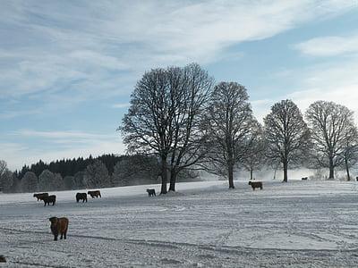 Zimní, stromy, sníh, Příroda, Les, Zimní, chlad