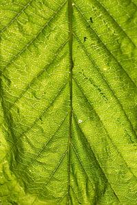 Leaf, štruktúra, Zelená, Príroda, listy, textúra, rastlín