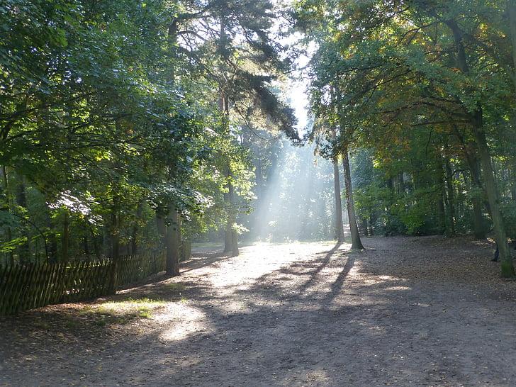 morgenstimmung, bosc, natura, llum