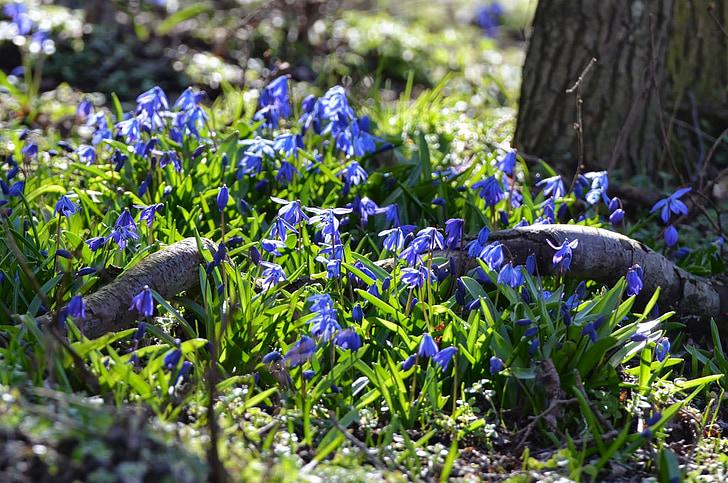 forest, spring flowers, blue, springtime