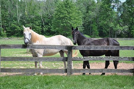 con ngựa, con ngựa, động vật, ngựa, Cưỡi ngựa, Trang trại, Stallion