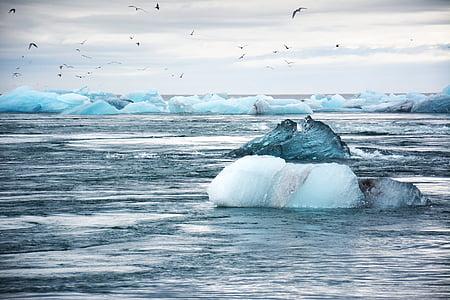 birds, cold, frozen, ice, iceberg, melting, ocean