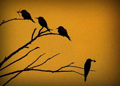 пчелояд, Merops apiaster, птица, птици, седи, улова, залез