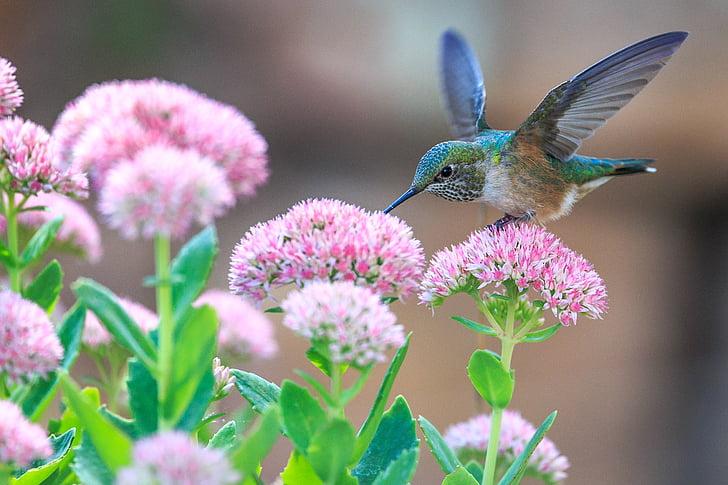 green, leaf, plant, nature, blur, flower, garden