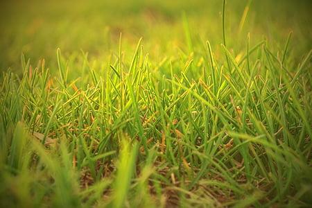 profunditat de camp, camp, herba, gespa