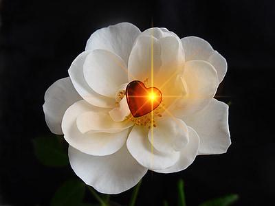 ruža, srce, ljubav, Sreća, Hvala ti, dekoracija, festivala