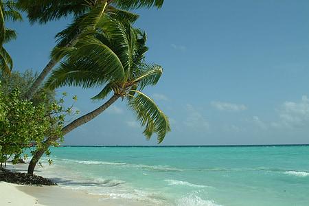 Пальми, Мальдіви, пляж, море, тропічний клімат, Природа, літо