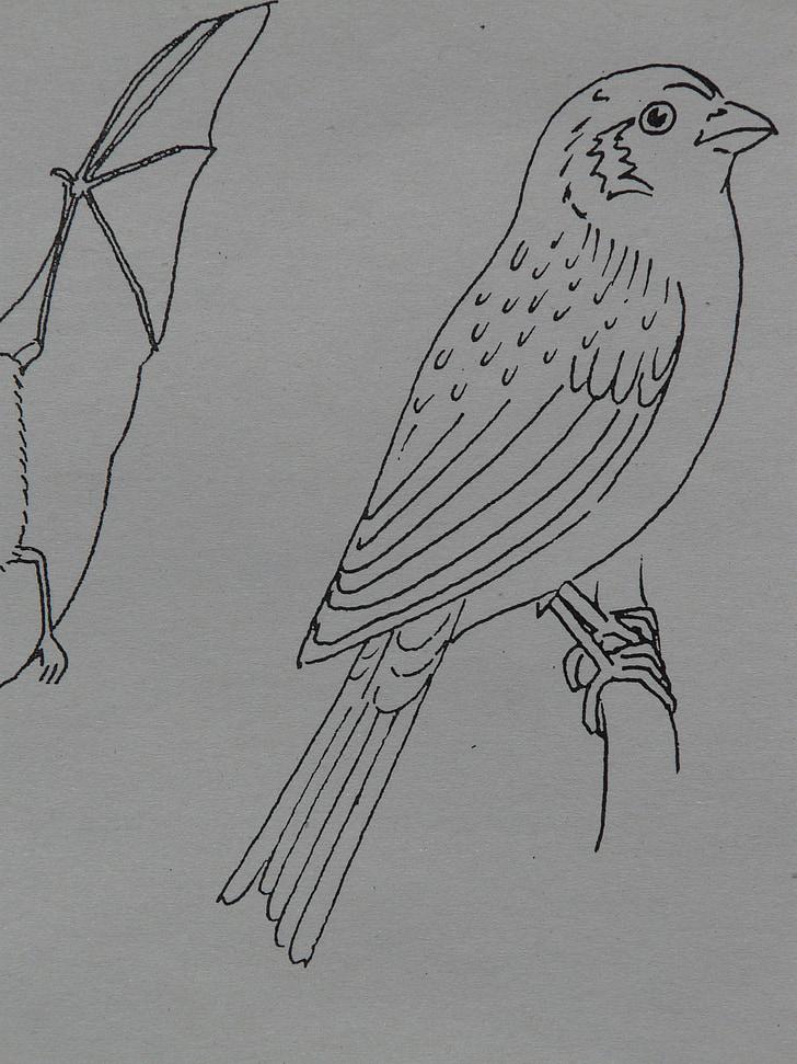 oiseau, Sparrow, animal, pages à colorier, peinture, tirage au sort, modèle de signe
