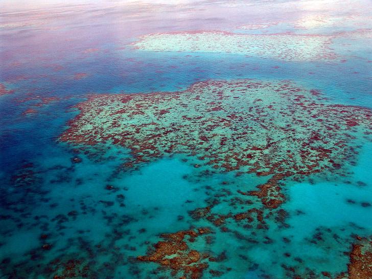 gran barrera de coral, buceo, Coral, Océano, Pacífico, vista aérea, Australia