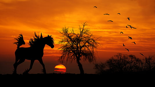 horse, arab, sunset, wood, shrubs, trot, birds silhouettes
