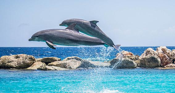 Дельфіни, акваріум, стрибки, риби, тварини, океан, води