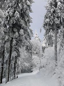 Zimní, sníh, LED, chlad, Zimní, bílá, strom