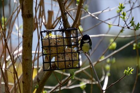 tit, bird, bird seed, small bird, nature, peck