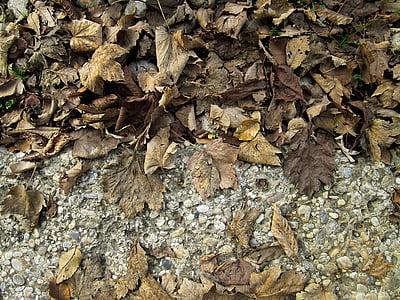 kuivad lehed, Sügis, sügisel, kuiv, loodus, hooaja, lehed