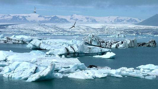 iceberg, iceland, glacier, arctic, ice, iceberg - Ice Formation, snow