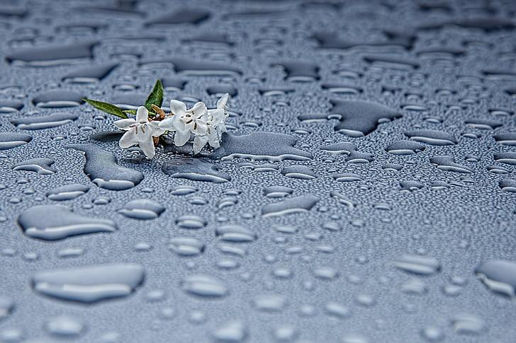 kvapky dažďa, vlhkosť, abstraktné, dážď, vody, drop, kvapôčky