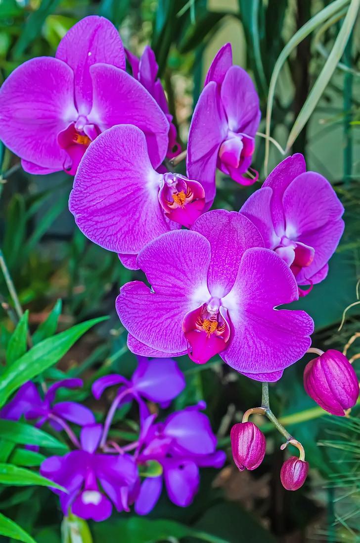 resum, aromàtics, Arranjament, bonica, flor, flor, botànic