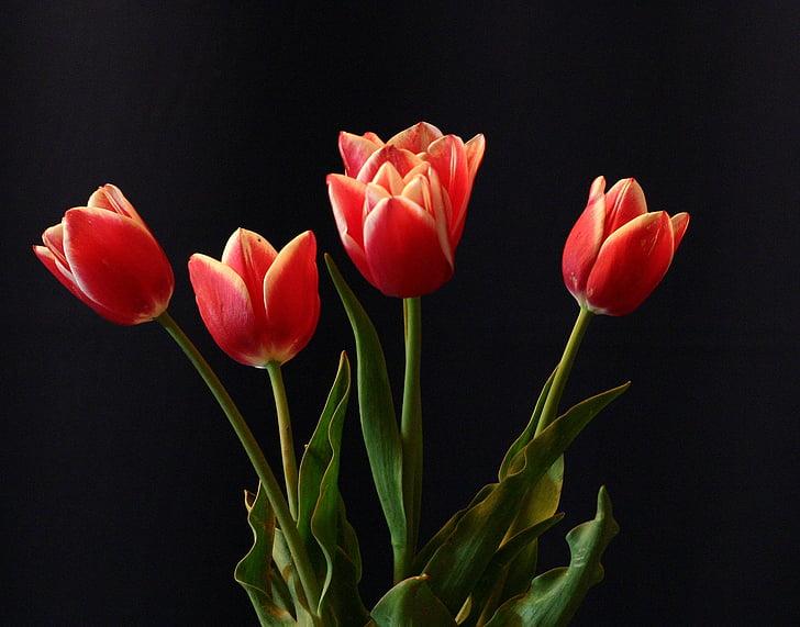 flor, tulipes, vermell, bodegons, decoració, dia de la dona