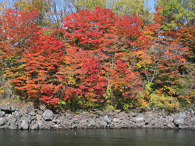 autumn, autumnal leaves, arboretum, colorful, woods, forest, maples