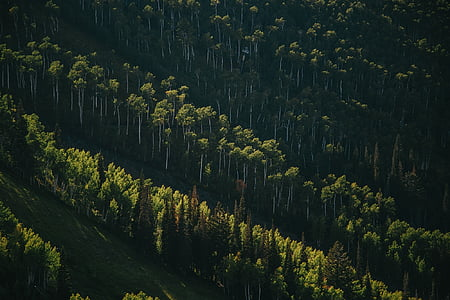 green, grass, trees, field